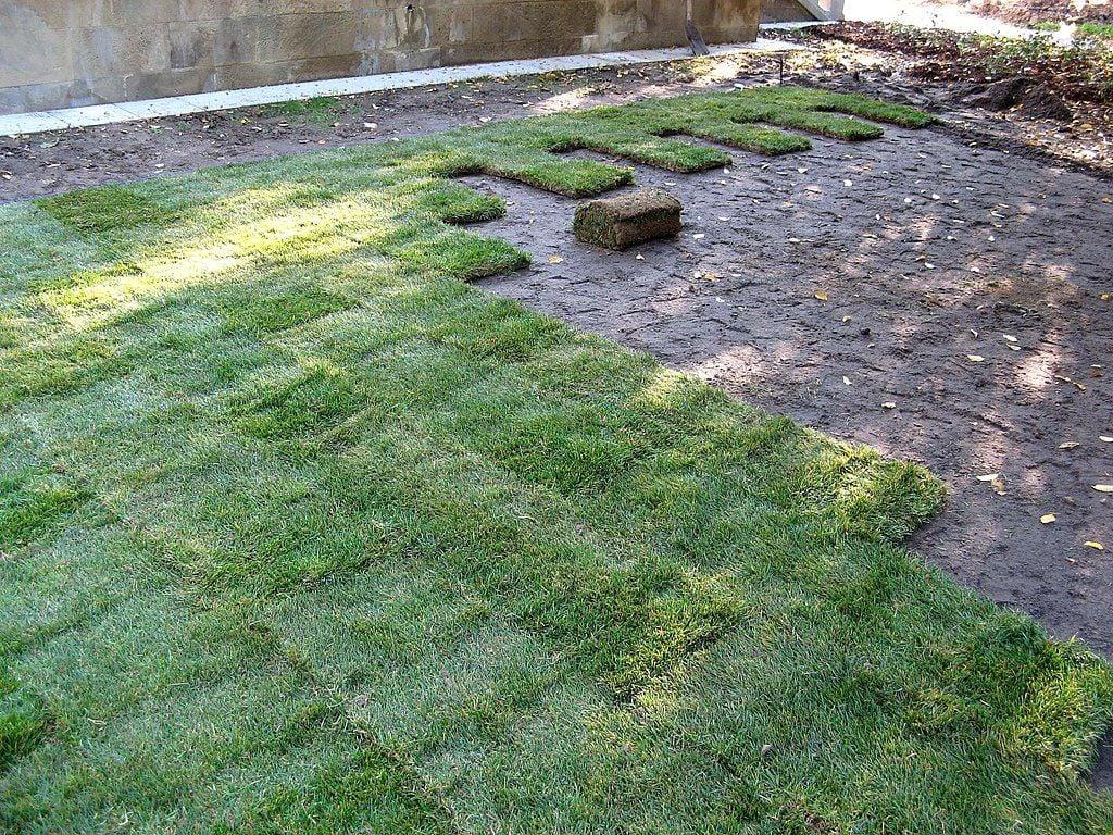 Grass Sod