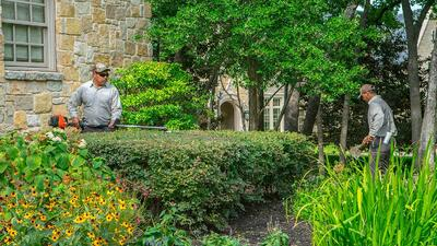 professionals pruning and trimming shrubs in Texas