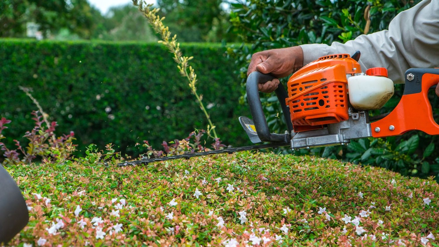 shrub trimming performed by landscape maintenance technician