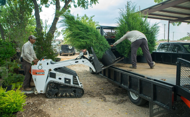 Landscape maintenance crew moving shrubs