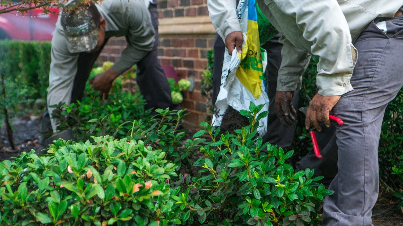 grassperson-crew-planting-11