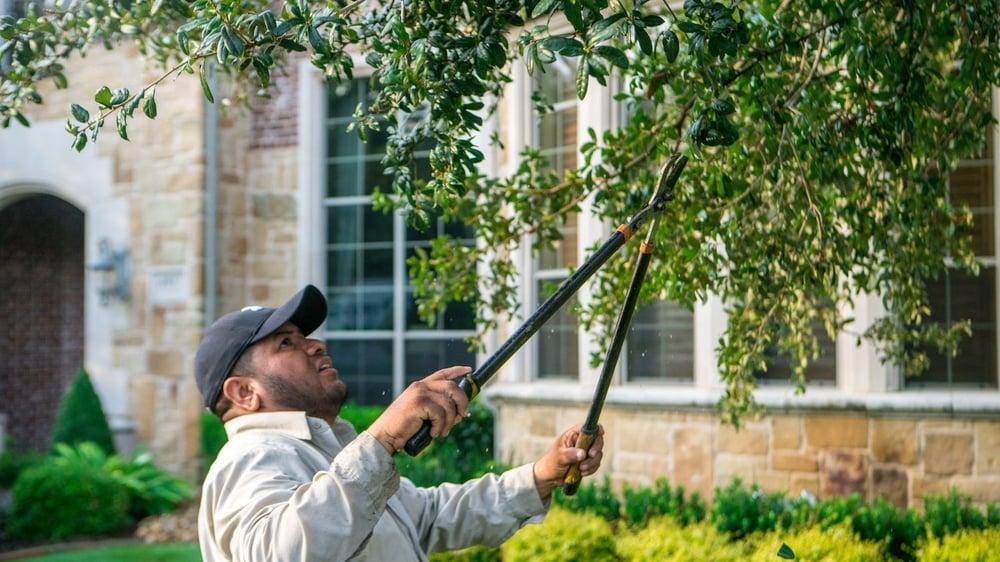 technician pruning tree in lawn