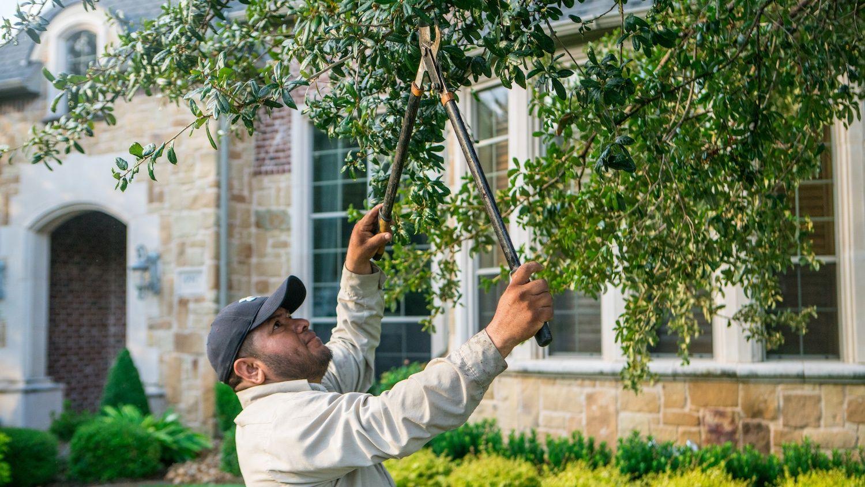 landscape maintenance technician pruning tree