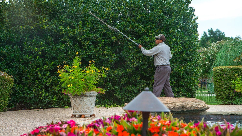 technician pruning ornamental trees in Texas