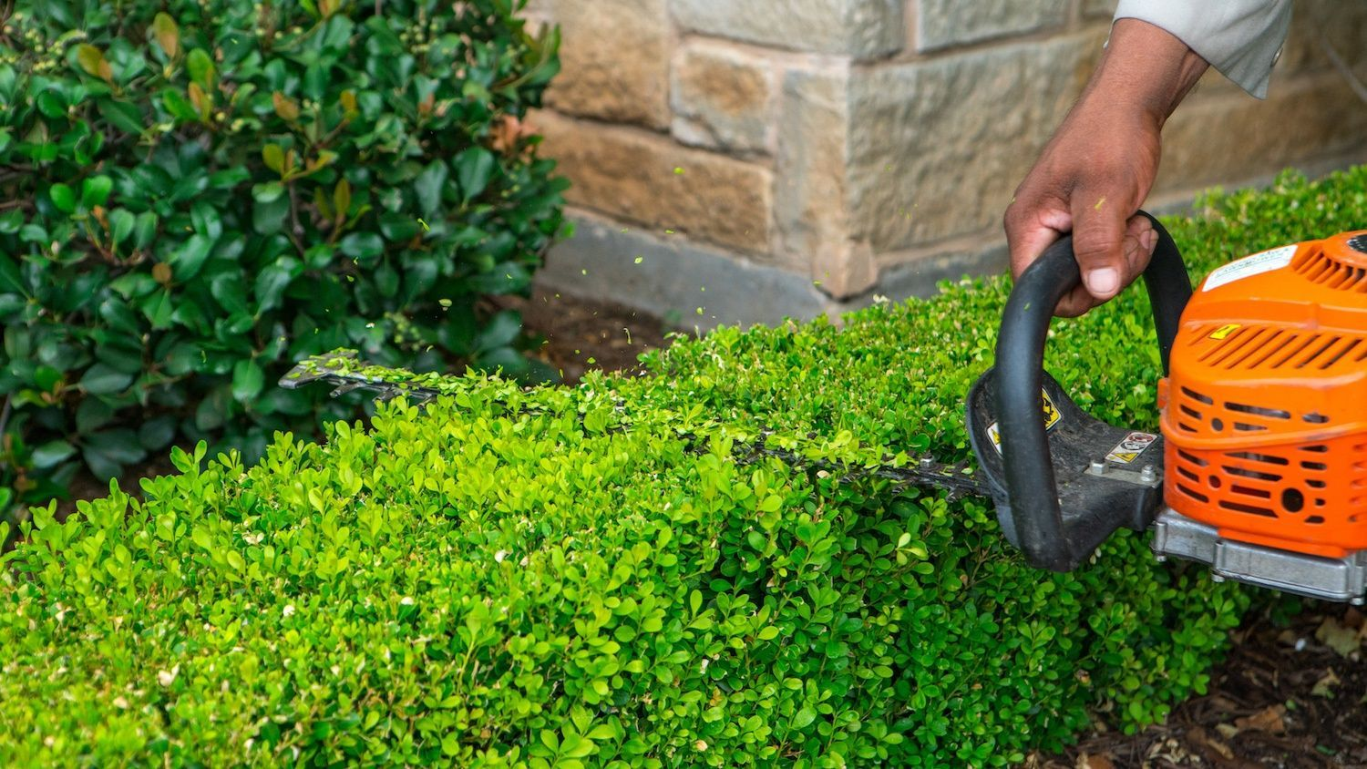 shrubs being trimmed by landscape maintenance professional