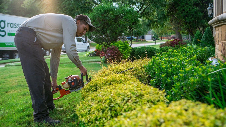 Grassperson landscape company technician trimming shrubs