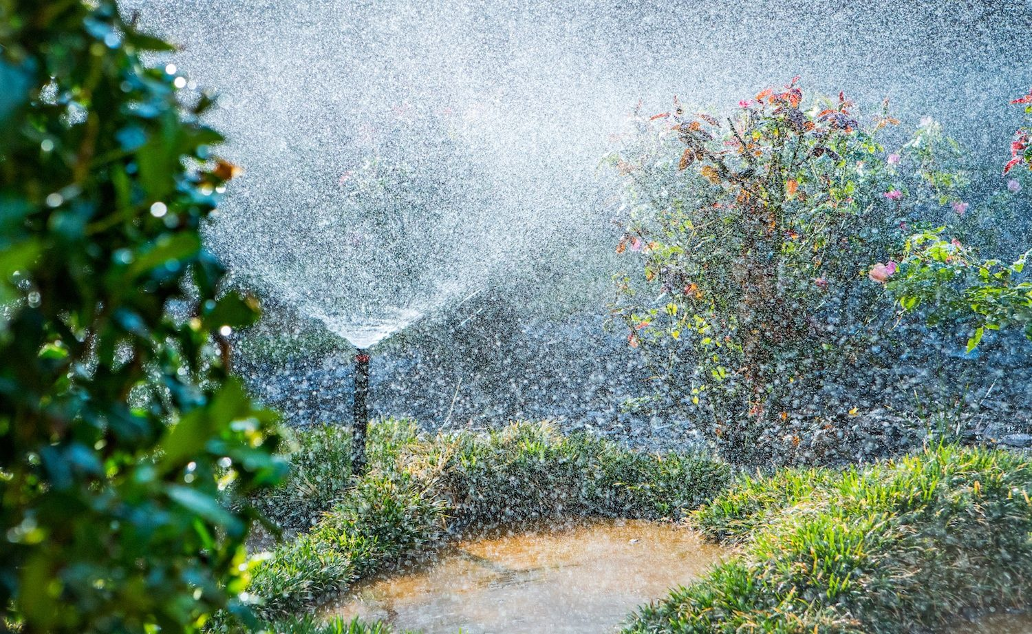 Irrigation watering lane and plants in Texas
