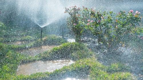 irrigation-plants-walkway