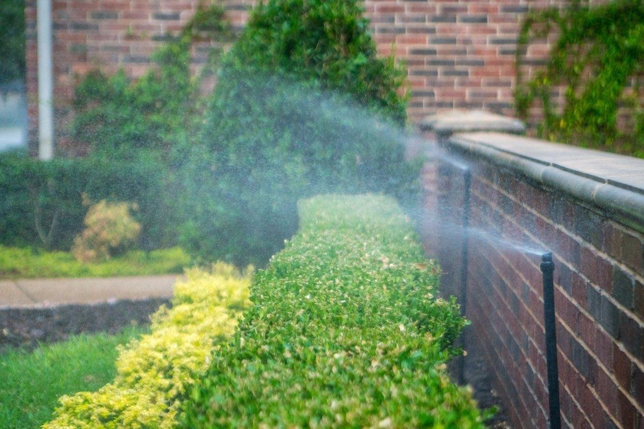 irrigation system spraying shrubs