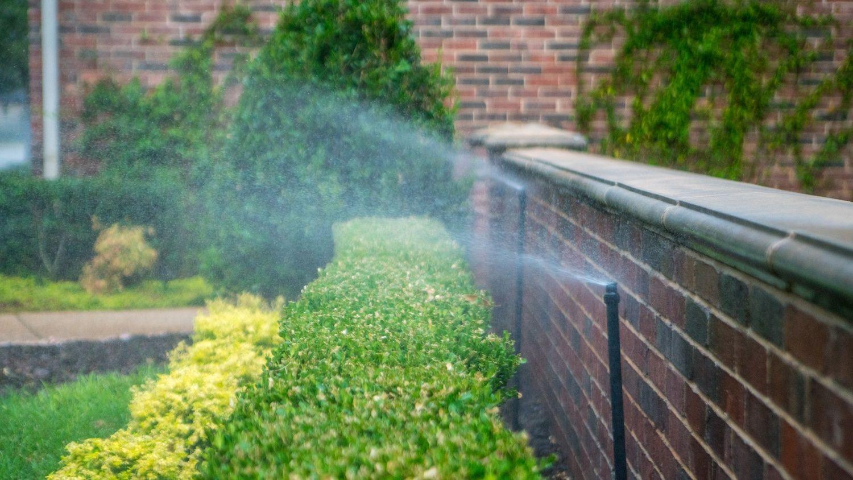 professional plant and shrub irrigation
