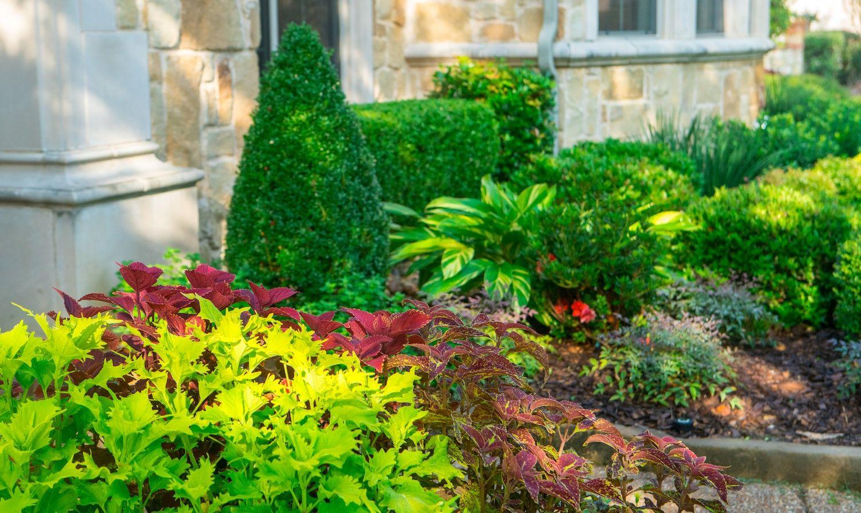 plants-leaves-shrubs