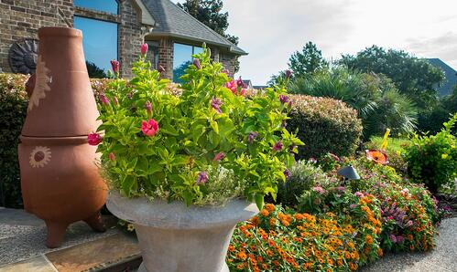 plants-flowers-shrubs-bushes-trees
