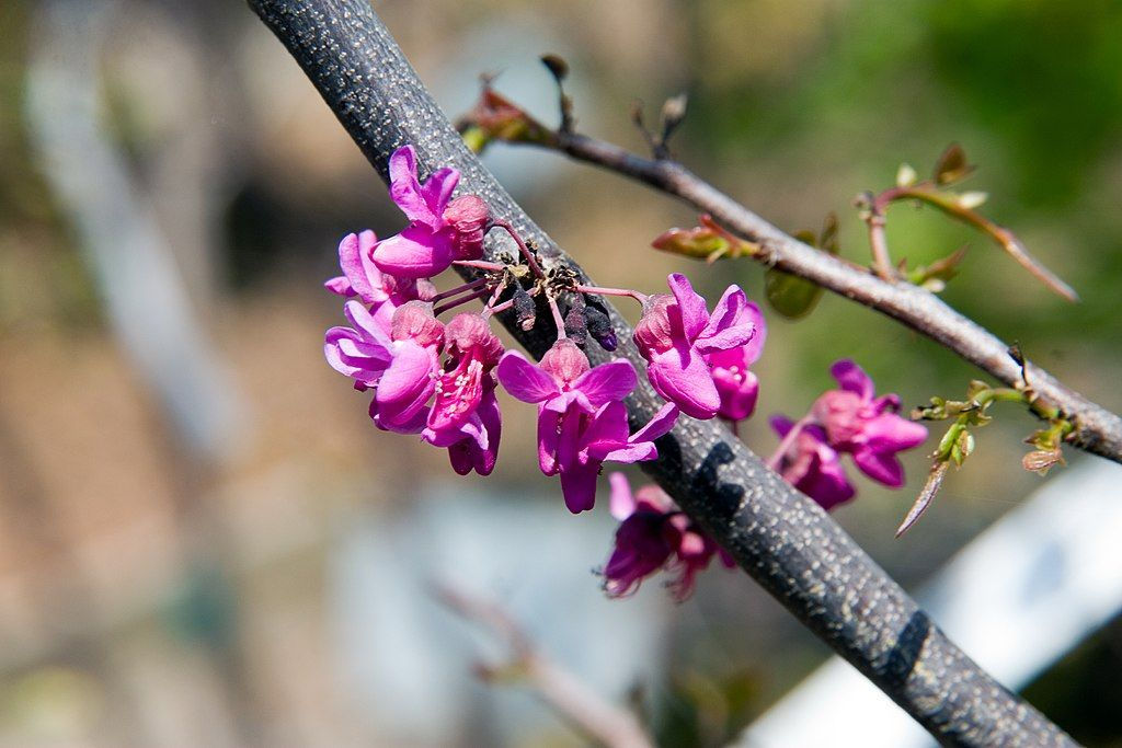 Best Low-Maintenance Trees & Shrubs Perfect for Flower Mound, Highland Village, or West Plano, TX