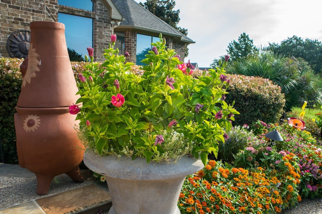 5 Tips For Planting Annual Flowers in North Texas – Flower Planting Guide
