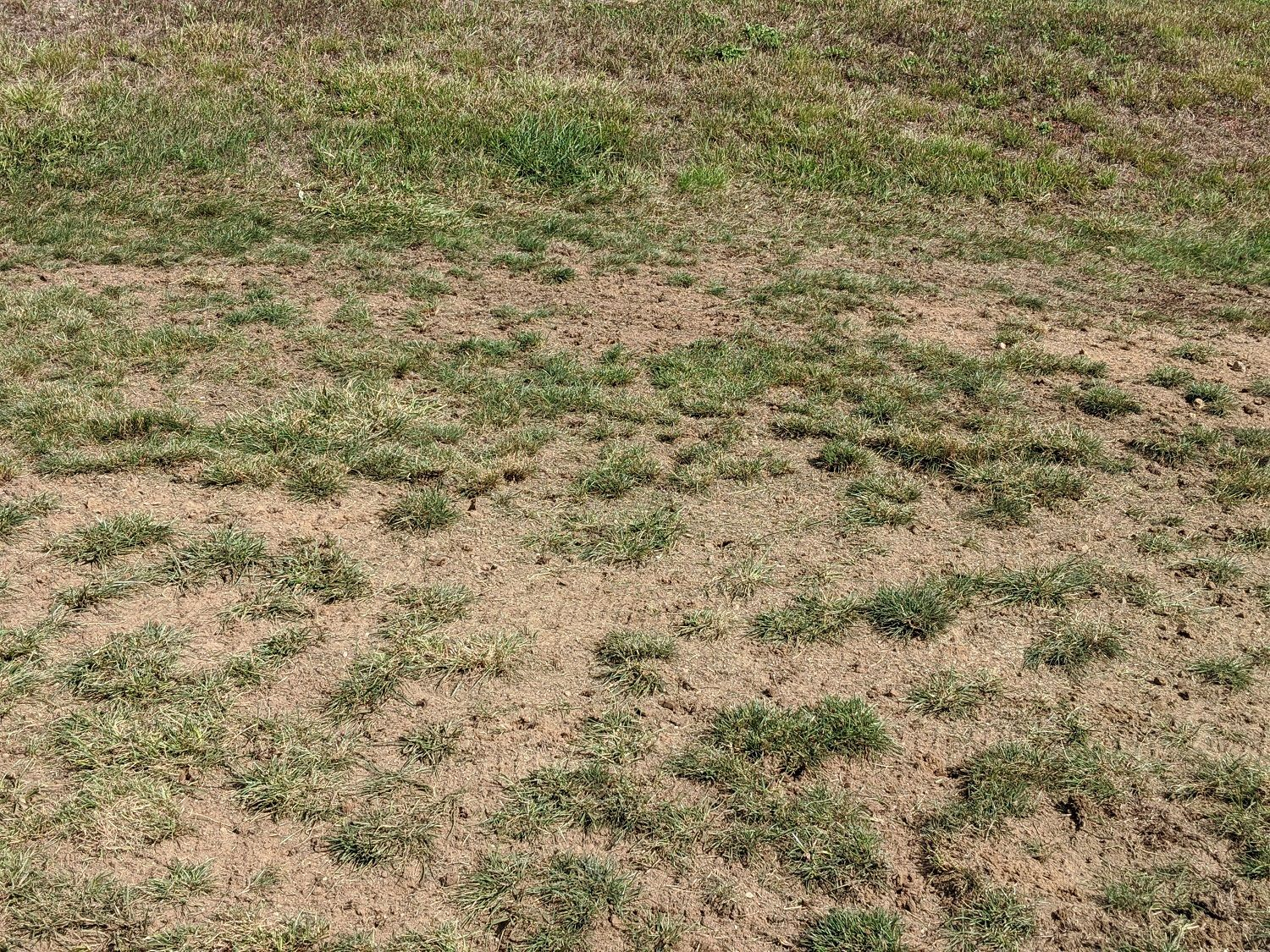 How to Fix Bare Patches in Your Lawn: 3 Steps to Success